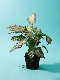 My Attic: Today's Crush: Cool Plant Styling by Victoria Ling