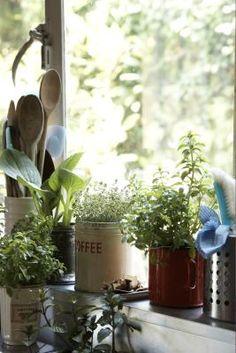 Small Slow-Growing Indoor Plants for Windowsills