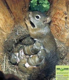 The epitome of Motherly love with her youngsters. ...