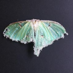 Here's the second crystallized Luna moth from last nights #periscope! It came out a lot better than I expected and its even sturdier than the last one!! Thanks again to everyone who tuned in and sorry again about my phone dying near the end! And another huge thank you to @skullerygram for the awesome moth! #tylerthrasher #luna #moth #crystallized #tulsa #chemistry #alchemy