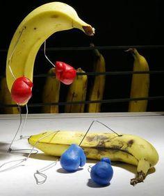 حلبة ملاكمة الموز