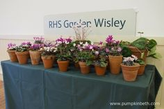 The Royal Horticultural Society produced this beautiful display of Cyclamen for The Cyclamen Society Show at the Hillside Events Centre at RHS Garden Wisley. Pictured on the February Container Plants, Container Gardening, February 2016, Early Spring, Surrey, Centre, Planter Pots, Gardens, Events