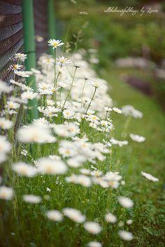 June Garden by loretoidas, via Flickr