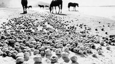 Andrei Tarkovsky / Ivan's Childhood