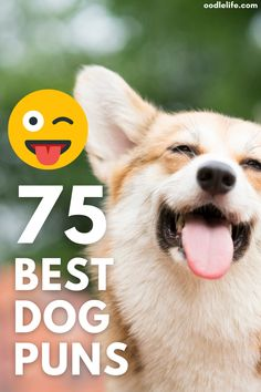 Looking for some great dog puns? Then paws what you're doing and read these! Dog Jokes, Funny Dog Memes, Funny Dogs, Cute Dog Toys, Cute Dogs, What Kind Of Dog, Dog List, Happy Dogs, Dog Photos