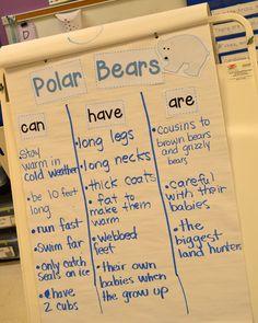 polar bear thinking map