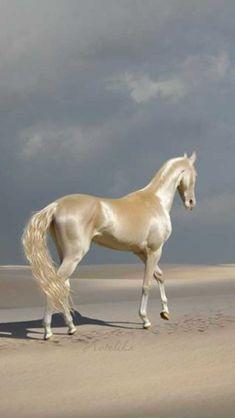 Akhal-Teke cheval dune grande beauté originaire du Turkménistan état d Most Beautiful Horses, Pretty Horses, Horse Love, Animals And Pets, Funny Animals, Cute Animals, Beautiful Creatures, Animals Beautiful, Akhal Teke Horses