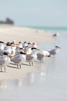group of terns on sandy beach by Angela Auclair