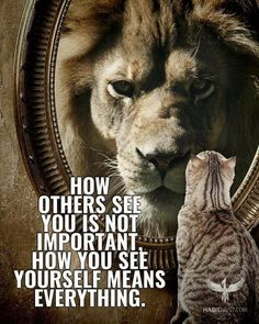 The daily quotes for inspiration and motivation is presented in the post. The daily quotes will motivates and inspires you. These quotes will motivates you. Inspirational Quotes In Hindi, Great Quotes, Positive Quotes, Motivational Quotes, Positive Mind, Positive Attitude, Positive Thoughts, Inspiring Quotes, Lion Quotes
