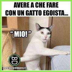 I #gatti a volte sono davvero... Tagga i tuoi amici e #condividi #bastardidentro #perfettamentebastardidentro www.bastardidentro.it