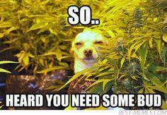 high dog is so high Stoner Humor, Weed Humor, Animal Memes, Funny Animals, Cute Animals, Animal Captions, Animal Funnies, Animal Pics, Animal Quotes
