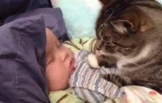 Кот+и+младенец.gif (321×205)