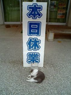 Tumblr: land-like-a-cat:    via 猫てれびCats TV(@neko_tube1)さん | Twitter