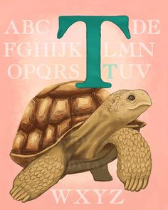 T Tortoise or Turtle Alphabet Print 8x10 Signed.