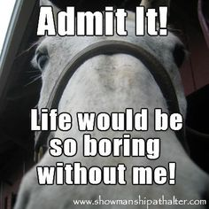 huhu - Horses Funny - Funny Horse Meme - - huhu Funny Animal Quotes The post huhu appeared first on Gag Dad. Funny Horse Memes, Funny Horses, Funny Animal Quotes, Cute Horses, Animal Jokes, Pretty Horses, Horse Love, Beautiful Horses, Horse Humor