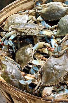 "I live for summer ""Crab Cracks"" in Charleston! basket of blues (crabs), South Carolina Pawleys Island, Chesapeake Bay, Am Meer, Coastal Living, Coastal Style, Southern Living, Belle Photo, East Coast, South Carolina"