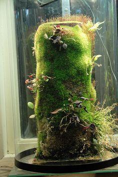 Nano vivarium Vivarium Terraria and Plants Orchid Terrarium, Moss Terrarium, Terrarium Plants, Moss Garden, Water Garden, Container Plants, Container Gardening, Indoor Garden, Indoor Plants