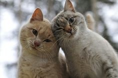 """de-lila-a-medio-dia: """" Cats in love. ♥ """""""