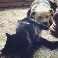 Best buds Best Bud, Dogs, Animals, Animales, Animaux, Doggies, Animal, Pet Dogs, Animais