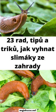 Czech Recipes, Vegetables, Fruit, Garden, Flowers, Garten, Lawn And Garden, Vegetable Recipes, Gardens