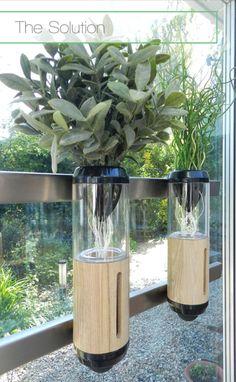 The Advantages Of Growing Food Indoors With Hydroponic Gardening Hydroponic Farming, Backyard Aquaponics, Aquaponics Fish, Hydroponics System, Home Hydroponics, Compost, Dubai Miracle Garden, Magic Garden, Diy Bathroom