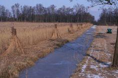 Giethoorn winter
