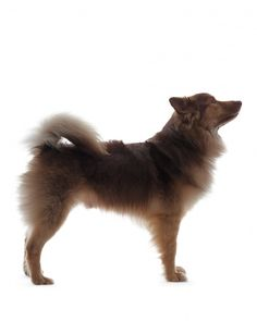 Tips for controlling pets' shedding