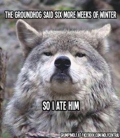 Funny pictures about Scumbag groundhog. Oh, and cool pics about Scumbag groundhog. Also, Scumbag groundhog. Haha Funny, Funny Cute, Funny Stuff, Funny Things, Funny Pics, Funny Shit, Random Stuff, Random Things, Funny Blogs
