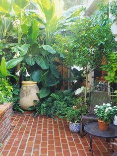 Tropical patio plants tropical garden patio surrounded by lu Tropical Backyard, Backyard Plants, Small Backyard Landscaping, Small Patio, Tropical Plants, Landscaping Ideas, Patio Ideas, Paved Backyard Ideas, Cozy Backyard