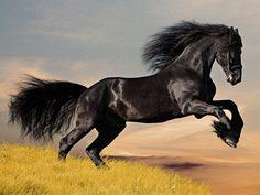 Home affaire Glasbild schwarz, »Schwarzes Pferd« Jetzt bestellen unter: https://moebel.ladendirekt.de/dekoration/bilder-und-rahmen/bilder/?uid=5f550f8e-6eb9-5a7e-8db0-b65a5fa29a48&utm_source=pinterest&utm_medium=pin&utm_campaign=boards #bilder #rahmen #dekoration