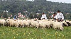 Góóóóóóóóraluuuuuuuuuu czy Ci nie zał? http://puszystaowca.pl/wypas-owiec/