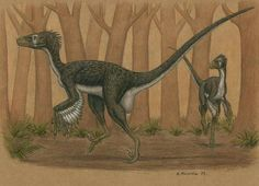 Dromaeosaurus albertensis. Art by Heraldo Mussolini Dromaeosaurus was a genus of theropod dinosaur which lived during the Late Cretaceous period, sometime between 76.5 and 74.8 million years ago, in the western United States and Alberta, Canada.