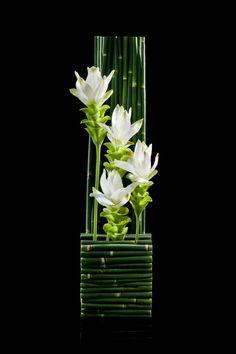 art floral moderne, ikebana avec tiges de bambous verts