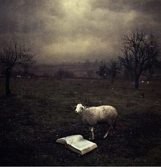 Don't be a Sheep. Educate Yourself! (Photography by Sarolta Bán.)