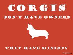 Corgi funny and true. Z