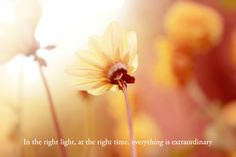 In the right light, at the right time, everything is extraordinary!