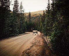 matthewschueller Rocky Mountain Natl Park