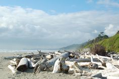Kalaloch Beach, Olympic Peninsula, Washington, USA, 2011