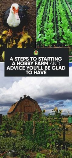 Urban Gardening 4 Steps to Starting a Hobby Farm and Advice You'll Be Glad to Have - The in's and out's of hobby farming. What is a hobby farm, why you should have one and information to help you with decisions for setting it up. The Farm, Mini Farm, Small Farm, Permaculture, Starting A Farm, Hobby Town, Hobby House, Hobby World, Farm Layout