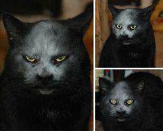 Gato negro juega con harina y se convierte en un ser diabólico
