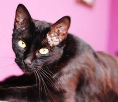 Belezinha, a gata preta. #gato