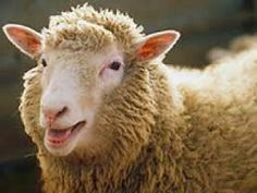 ovella Dolly, la primera en intentar ser clonada