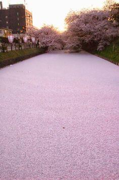 A river in petals