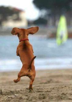 Dog Dance <3