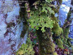 Muestreo bosques asturianos