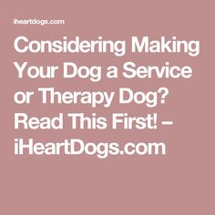 Considering Making Your Dog a Service or Therapy Dog? Read This First! – iHeartDogs.com