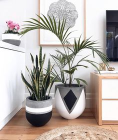 Plant Stand ideas to Fill Your Living Room With Greenery You Will Love It . Plant Stand id Painted Plant Pots, Painted Flower Pots, Eco Deco, Plantas Indoor, Decoration Plante, Concrete Crafts, House Plants Decor, Deco Floral, Potted Plants