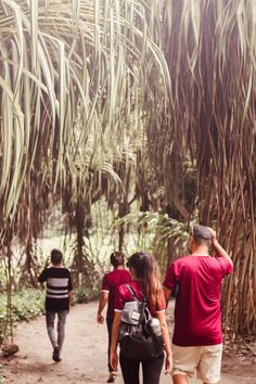 Uno de los principales destinos turísticos en Yaracuy es el Parque de la Exótica Flora Tropical Misión Nuestra Señora del Carmen.