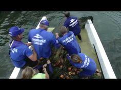 Rescued manatee gives birth to calf at SeaWorld Orlando