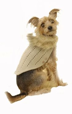 Puchi - City Slicker Dog Jumper Coat – The Dog Demands Faux Fur Collar, Fur Collars, Dog Jumpers, City Slickers, Pet Fashion, Dog Hoodie, Fur Trim, Your Dog, Teddy Bear